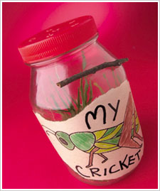 Kid's Cricket Jar