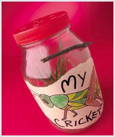 Kid's Cricket Jar