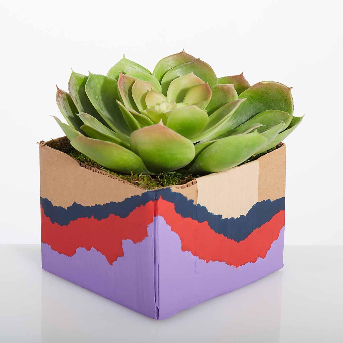 Cardboard Box Planters