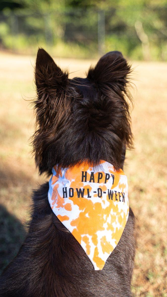 Halloween Puppy Bandana