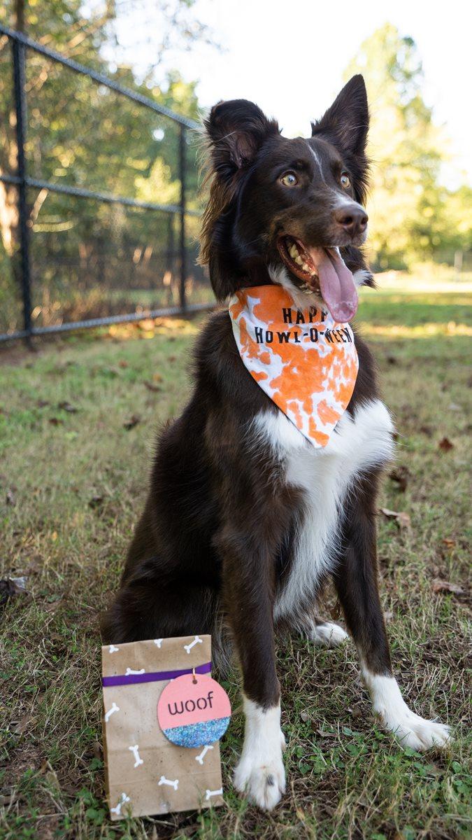 Halloween WOOF Dog Treat Bag