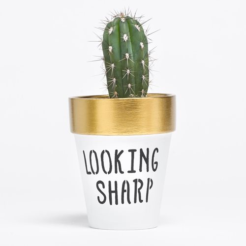 """Looking Sharp"" Flower Pot"