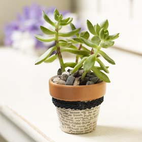 Unusual Wedding Favors - Personalized Succulent Plant Holders